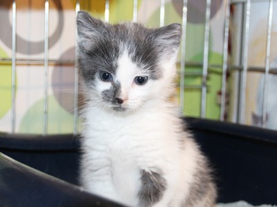 kitten-bij-carine