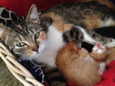 moederkat met kids