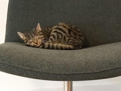 kat slaapt op de zetel