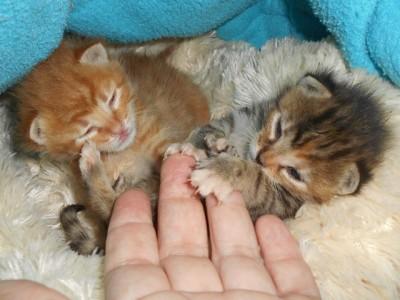 kittens helpen