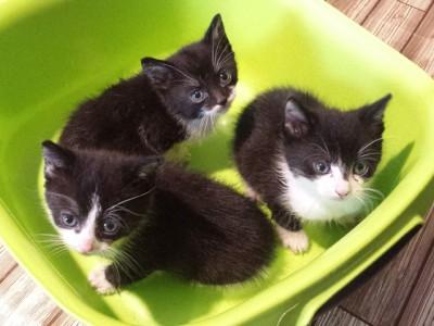 drie kittens pinkstermaandag bij leen