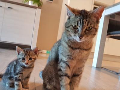 uvita en kitten