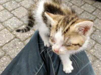 aankomst kitten met etteroogjes