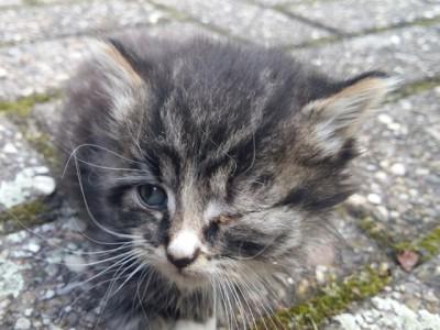 onderkomen kitten met dicht oogje