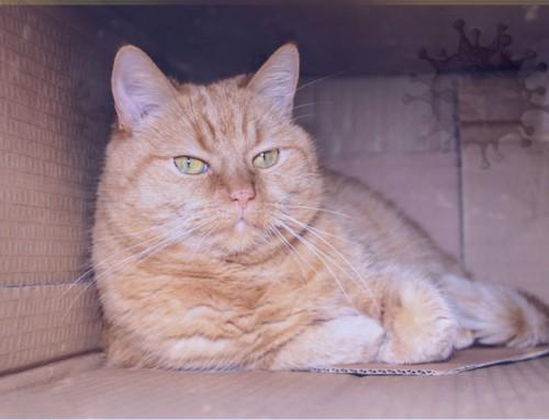 De kat en COVID-19