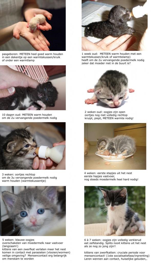 gevonden kittens leeftijd schatten