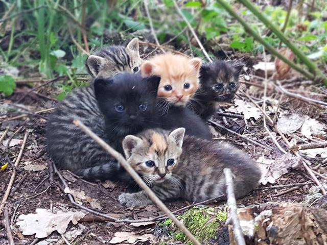 Babykittens gevonden