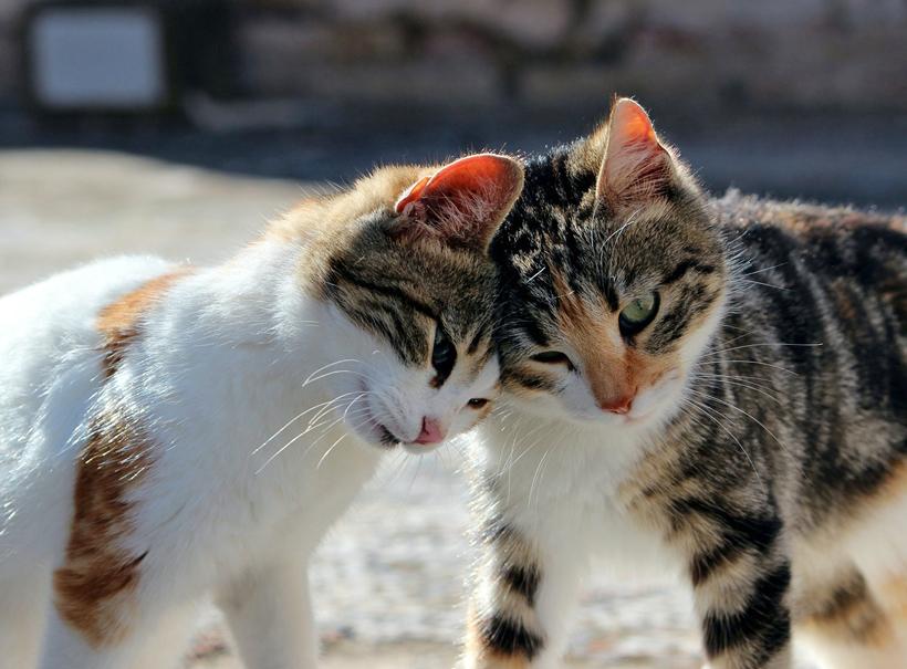 katten wisselen geuren