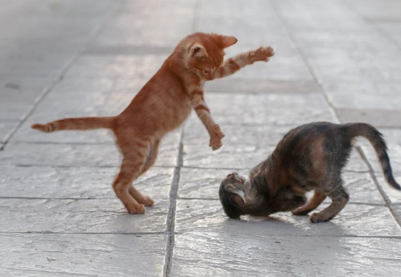 duo kittens leren grenzen kennen